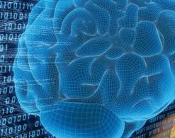 cerebro-mente
