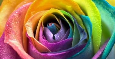 Colour-Therapy-1
