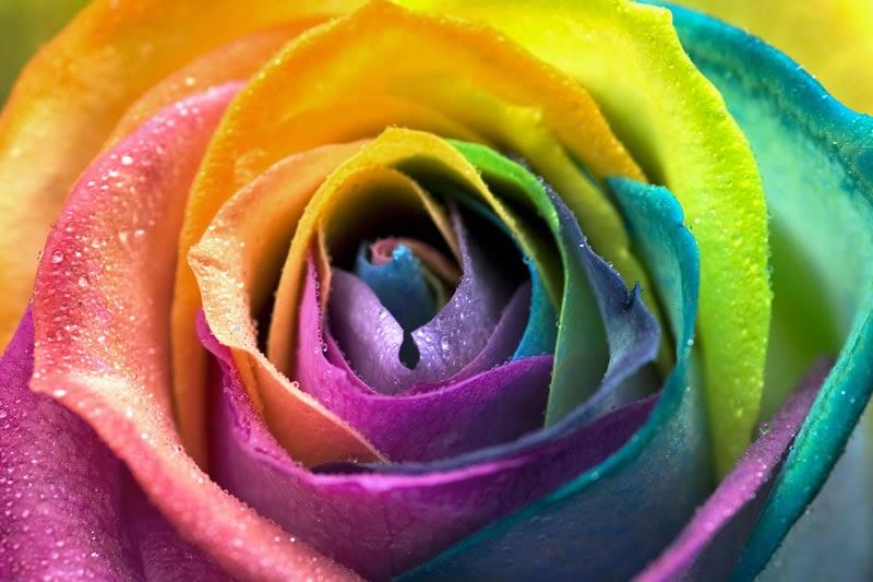 Cómo los colores afectan tu estado de ánimo