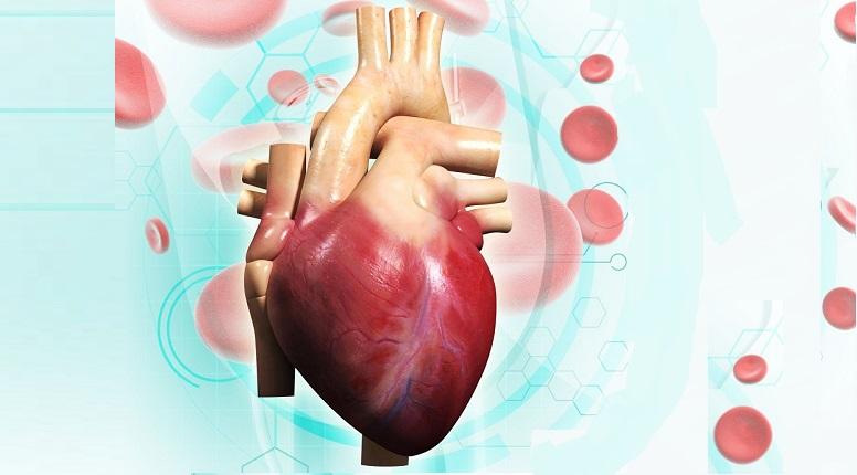 beneficios del té rojo para el corazón y la salud cardiovascular
