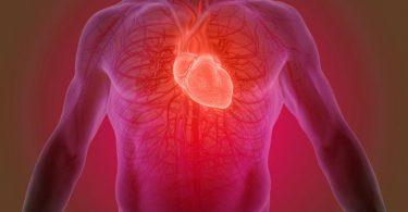 Los nutrientes para tener un corazón más sano