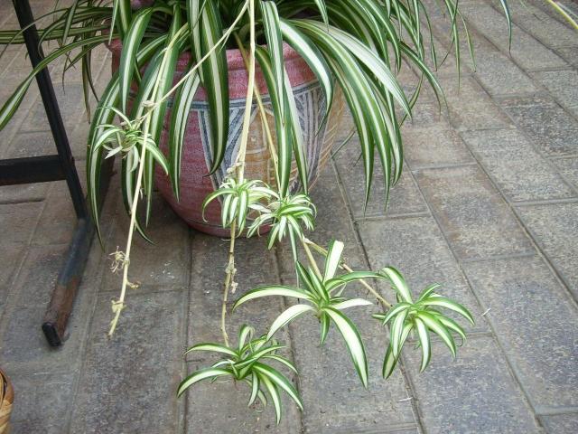 10 plantas de interior que benefician la salud - Plantas de interior cintas ...