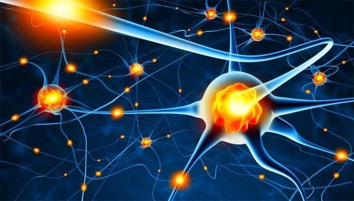 Aprendiendo a ejercitar las neuronas