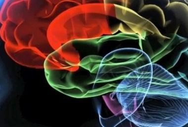regiones-cerebro-futuro-inmediato-588x257