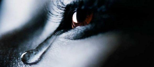 Las lágrimas pueden ser curativas