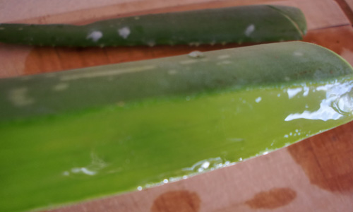 gel de aloe vera en casa