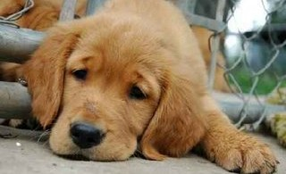 depresion-perros