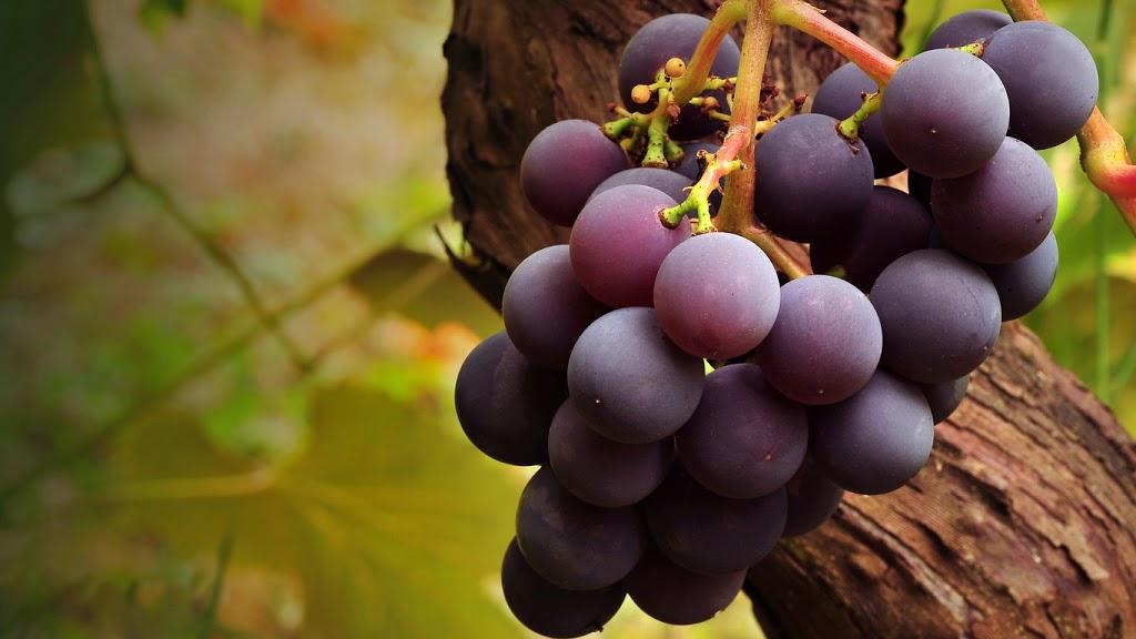 poder curativo de las uvas