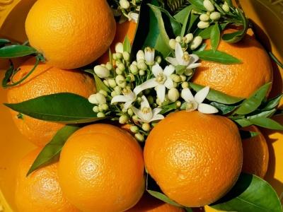 400_1207100728_arbol-de-naranjas