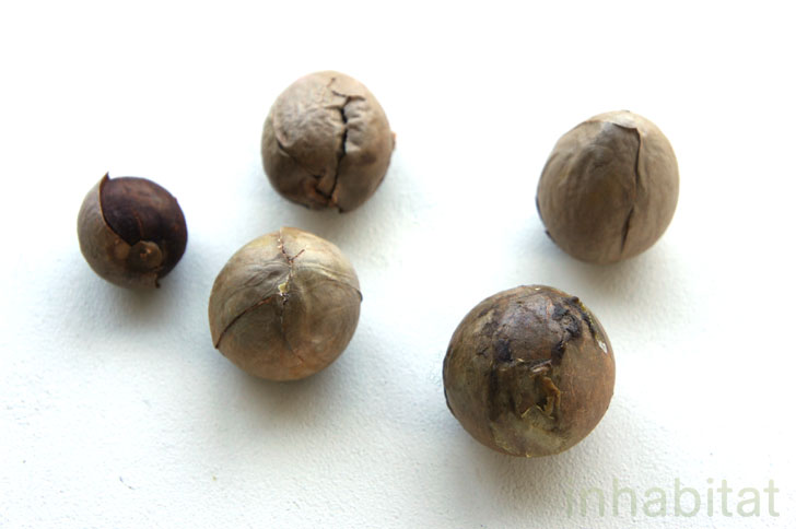 semillas de aguacate