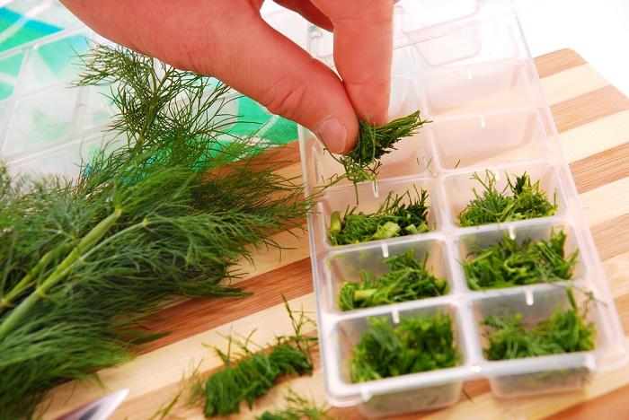 Cómo preservar hierbas frescas