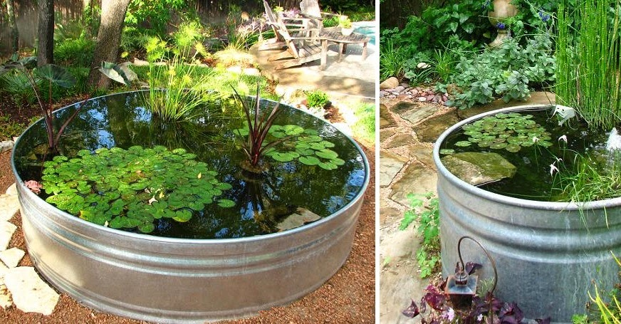 Como hacer un estanque acu tico con plantas y peces for Como hacer un estanque con peces