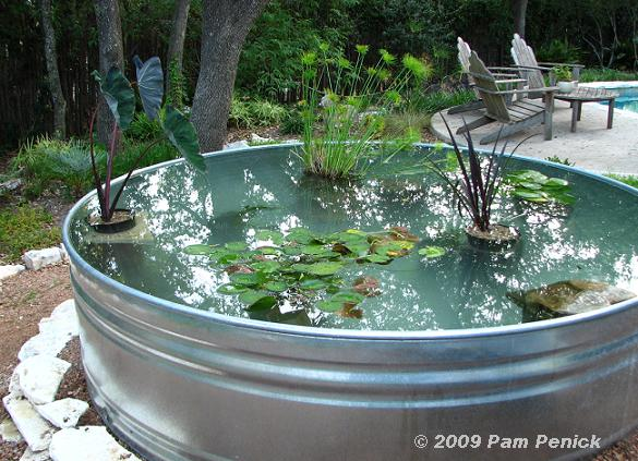 Como hacer un estanque acu tico con plantas y peces for Ornamental pond fish for sale