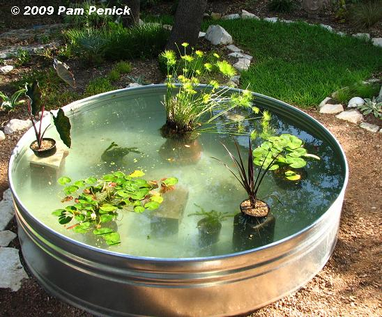 Como hacer un estanque acu tico con plantas y peces vida for Best fish for small pond