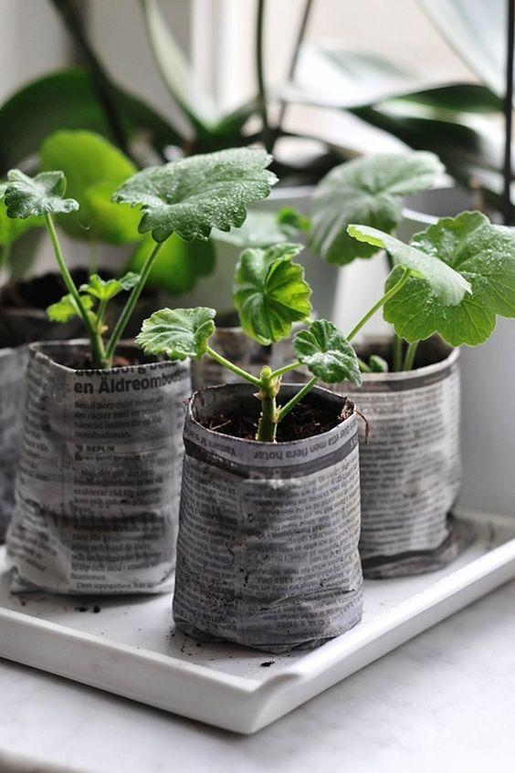 contenedores para semillas con periódico reciclado