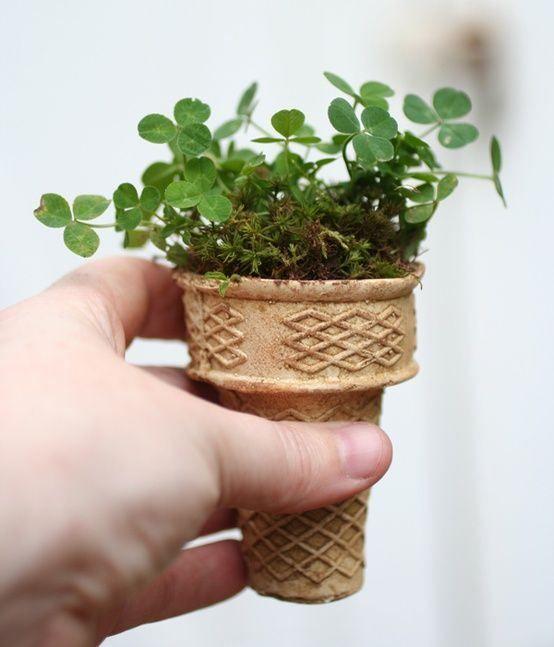 planta creciendo en un recipiente biodegradable para nieves