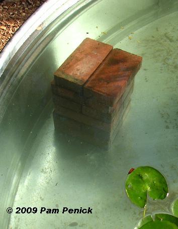 estanque acuático colocar ladrillos adentro