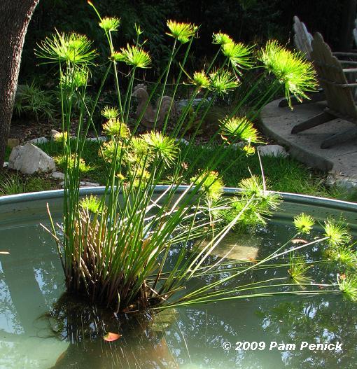 estanque acuático plantas dentro del agua