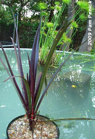 estanque acuático mármol negro