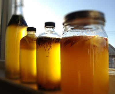 limentos fermentados kombucha