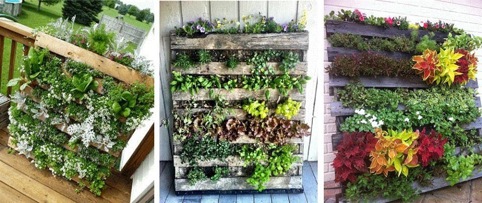 diseño vertical de jardín de hierbas