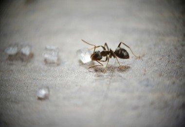C mo dise ar un sill n redondeado con pallet for Como quitar las hormigas del jardin