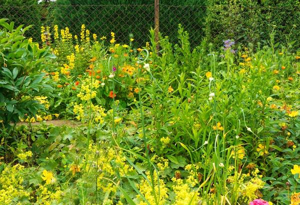 Jardín de plantas aromáticas esquema