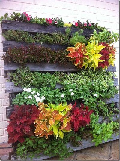 Jardin colgante con plantas coloridas