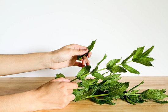 quitar las hojas de menta