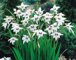 jardín de plantas aromáticas blanca