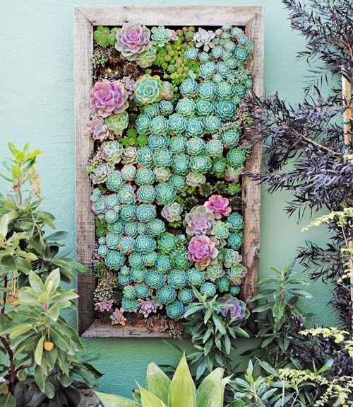 Un muro verde con suculentas