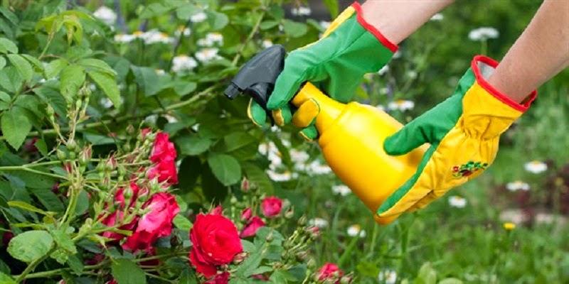 10 Fungicidas y pesticidas naturales