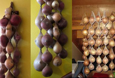 Almacenando cebollas en medias de nylon