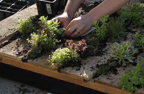 Plantines en el jardín