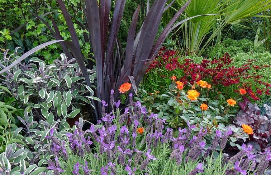 c mo crear un jard n de plantas arom ticas