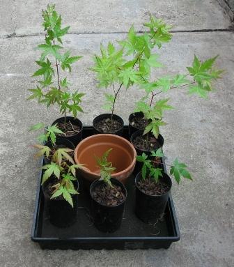 ya preparando la maceta con plantas