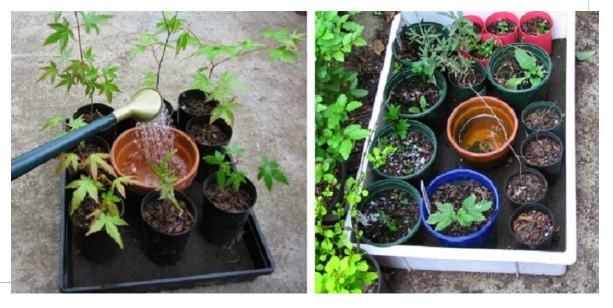 Una bandeja de auto riego para mantener las plantas siempre húmedas