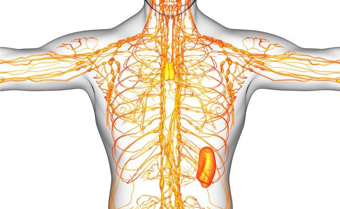 cómo limpiar el sistema linfático