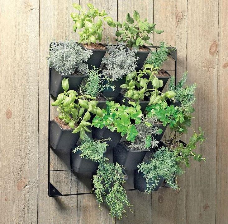 un pequeño jardín vertical para interior