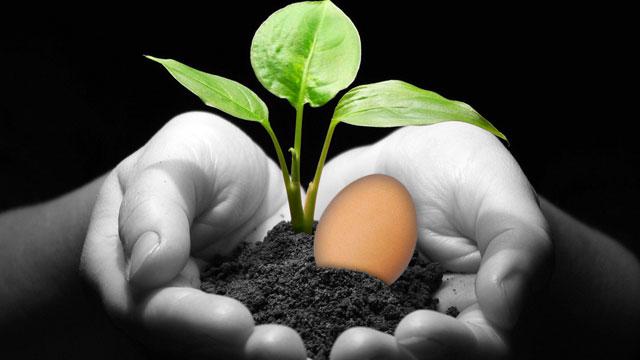 C mo cuidar las plantas con c scara de huevo for Como cuidar las plantas