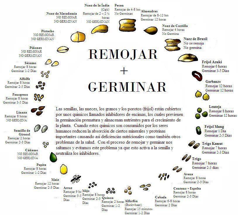 Propiedades y beneficios de los germinados y c mo crecerlos for Alimentos que contienen silicio