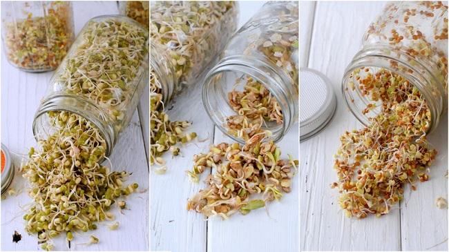 germinados de semillas y frijoles
