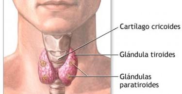 tiroides-10274