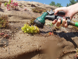 18-irrigation