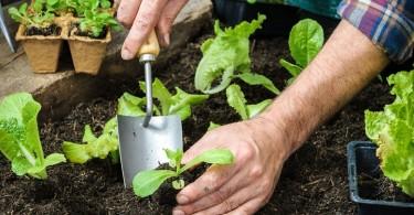 Permacultura cultivo hortalizas