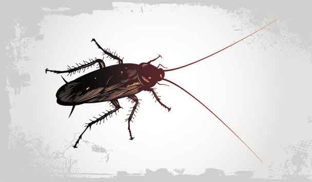 cómo eliminar las cucarachas