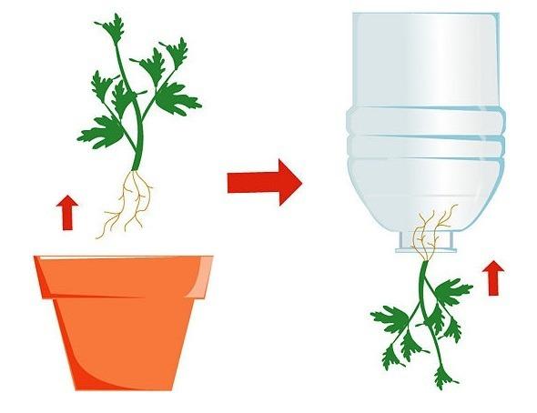 crecer tomates al revés paso 4