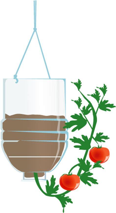 crecer tomates al revés paso 6