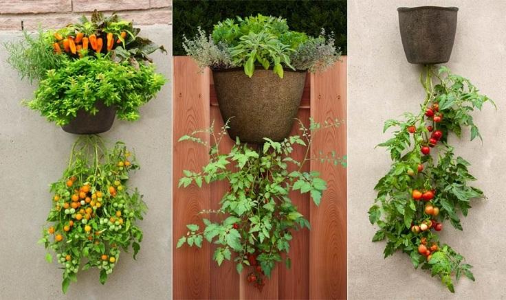 crecer tomates en espacio reducido