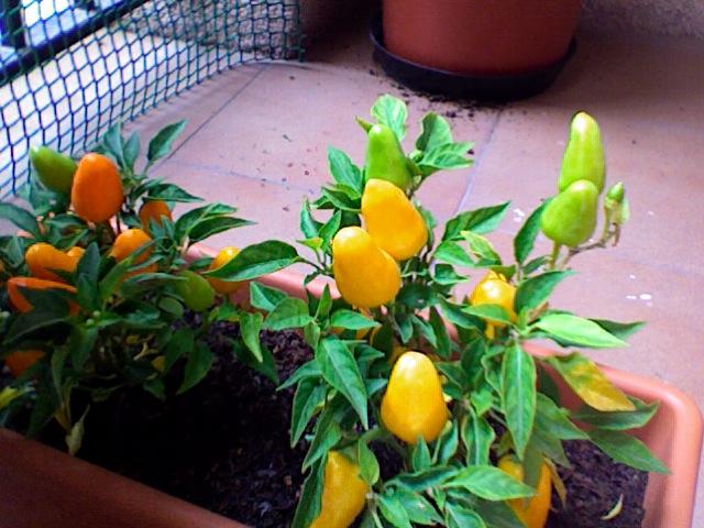Plantas resguardadas por el frío en los meses de invierno